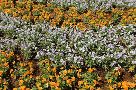 loveliness: the Flowers bed  In Yamashita Park at 2016