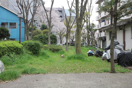 plainness: the homeless cat at japan Editorial
