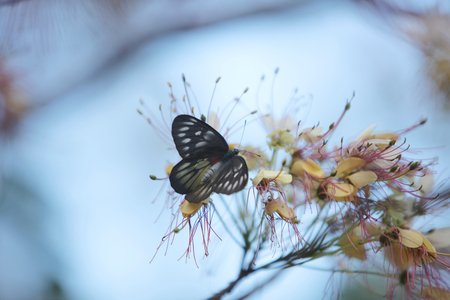 folliage: the large tree of butterfly  stay on