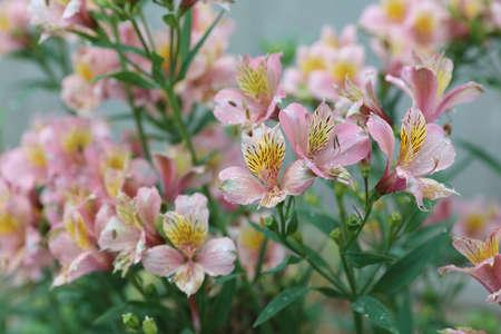 hiroshima: flower at rain day at Hiroshima japan