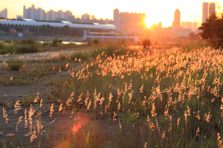 drippy: the blurry sunset with grass at summer Stock Photo