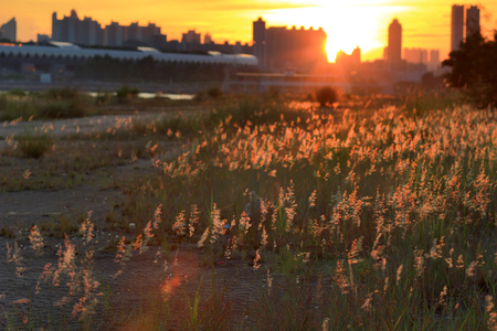 the blurry sunset with grass at summer Stock Photo