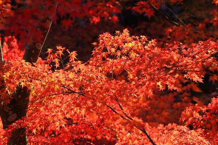 formosa: fall season in Tofukuji Temple japan