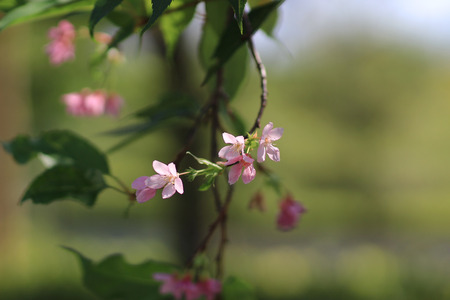 a pink blossom sukura flowers on a spring day
