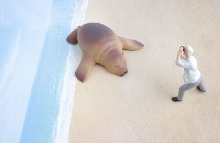 taking nap: the figure man taking photo with sea lion
