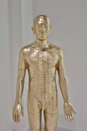 병원의 동양 의학 모델.
