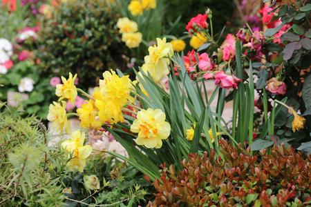 cranesbill: Perennial  garden flower bed in spring at flower show