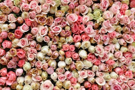 花をローズ柄の壁フラワー ショーします。 写真素材
