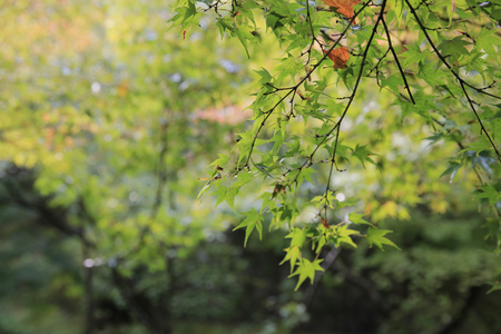 prefecture: an early fall season at garden of Tofukuji Temple