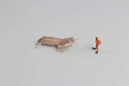 small world: the figure of diver with Peacock mantis shrimp