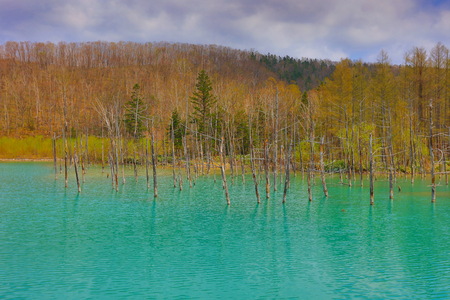the Blue Pond at in Hokkaido, JAPAN Stock Photo