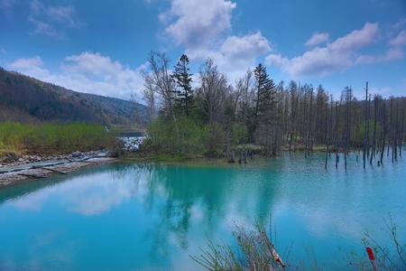 the Blue pond Aoiike in Biei, Hokkaido, Japan