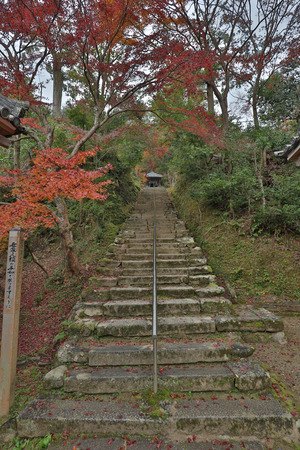 the Colour ful Autumn in Nison in Temple, Kyoto, Japan Editorial