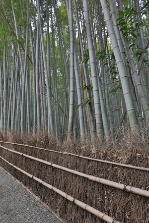 Maple tree fall season, Gio ji Temple