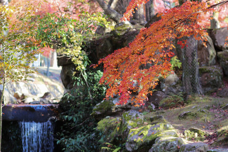 Landscape of Nara Park at autumn in Japan Stock Photo