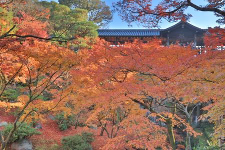 autumn foliage in Tofuku ji Temple in Kyoto Фото со стока