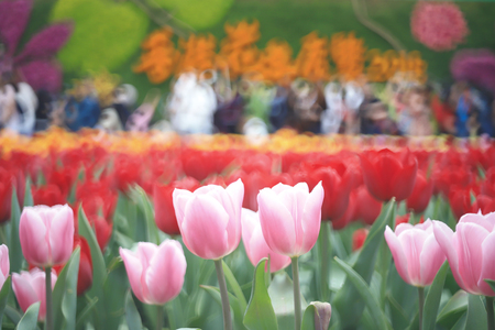 Flower show at spring time hong kong Stock Photo