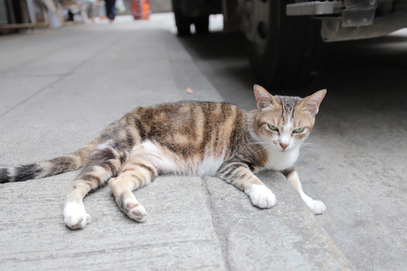 a homeless cat at hong kong  steet Banque d'images
