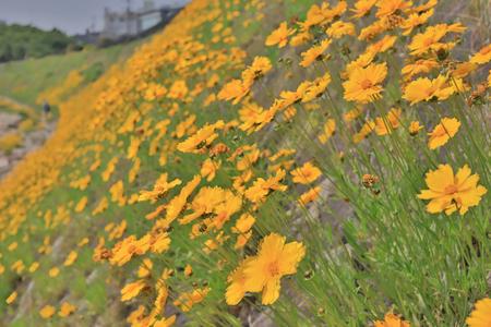 the flower ed near of asahi river Okayama