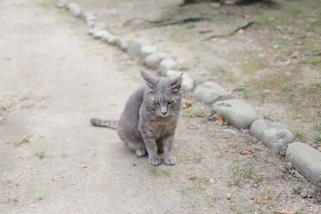 the homeless cat live at the Himeji City park