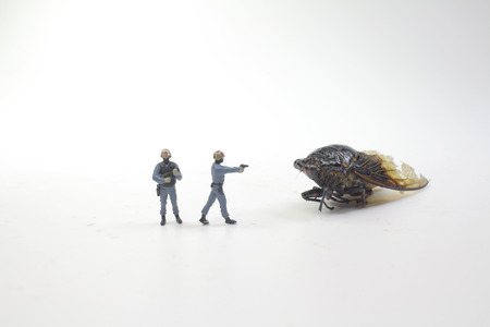 The tiny police face on the Monster Cicadidae