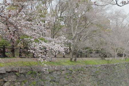Osaka plum garden at osaka japan