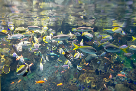 a Fish in the Osaka Aquarium Kaiyukan, Japan