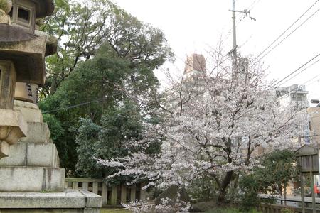 main shrine is designed in the oldest of shrine