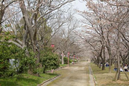 Osaka Castle plum garden at osaka japan
