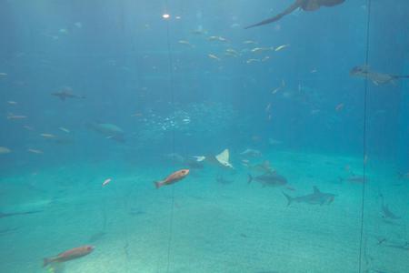 a largest public aquariums in Osaka japan