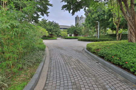 Winding Path through at tko park