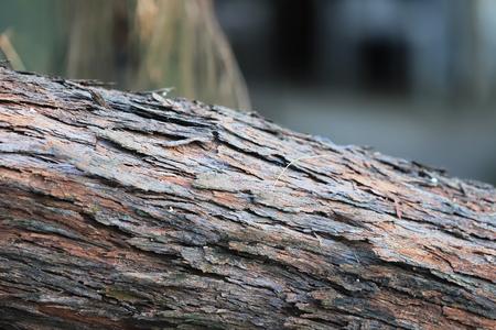 a Tree bark texture of close up Stock Photo