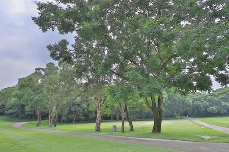the big treee at the gold club Фото со стока - 109501184