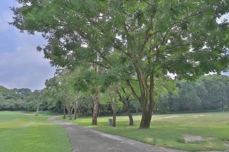 Green park path way at golf park