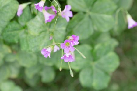 blooming flowers 版權商用圖片
