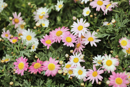 the multicolored flowerbed on a lawn