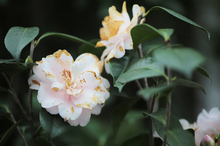 the Perennial garden flower bed in spring