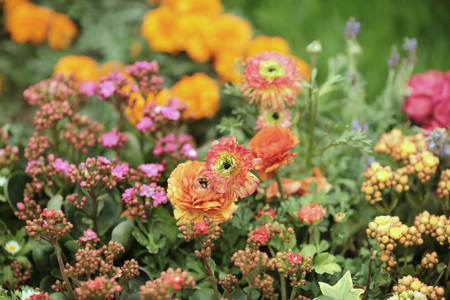 the multicolored flowerbed on a lawn spring time