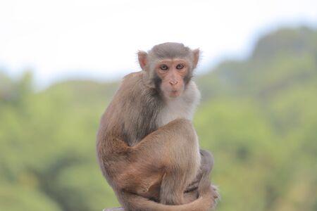 the Monkey at hong kong, Kam Shan Country Park