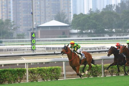 a Horse Racing. At Shatin , Hong Kong 12 Oct 2008