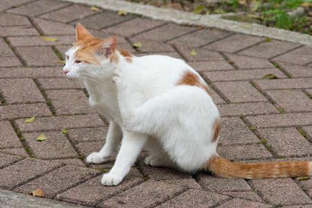 Cat on the street. a street homeless cat Imagens