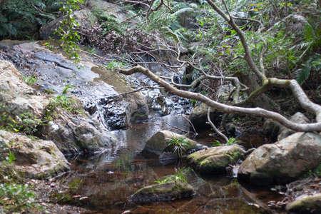 the river at the country park at hong kong