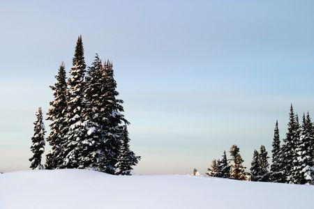 Mt. Rainier Trees Stock Photo