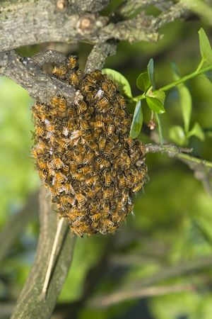 hive: Honey Bee Hive After Swarming Stock Photo