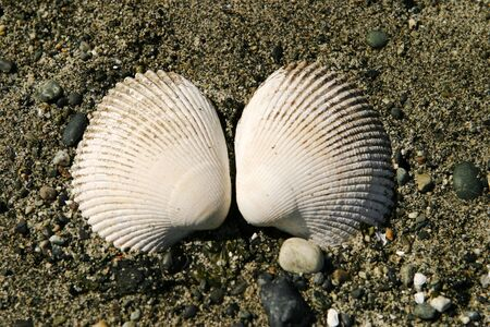 Two clam shells on the beach Banco de Imagens