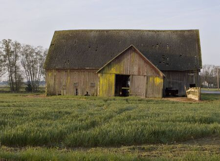 An old, weathered barn in the Skagit Valley of Washington. Yellow and green moss are visible on the walls of the structure which is just starting to tilt.