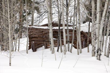 arri�re-pays: Une vieille cabane en rondins de bois abandonn�s couvertes de neige qui se trouve dans un stand de tremble arbres dans le Colorado arri�re.