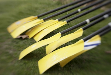 Eight yellow oars, lined up at a regatta, are ready for the crew race to begin.