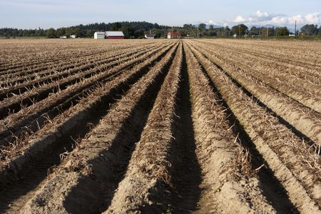 furrows: A traditional rural farm in the country with a field where the soil is plowed in long, straight rows.