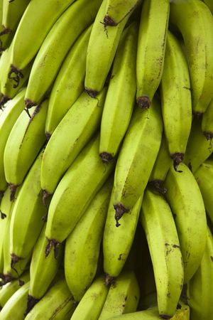A large bunch of green bananas on a plantation in the Galapagos Islands. photo